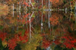 秋の乗鞍高原・まいめの池の写真素材 [FYI00198509]