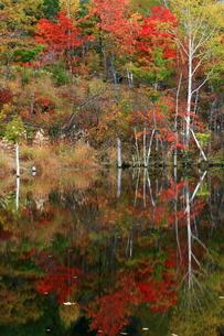 秋の乗鞍高原・まいめの池の写真素材 [FYI00198510]