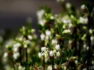 桜が散ったら出番ですの写真素材 [FYI00198571]