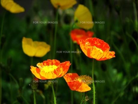 春の印象派の写真素材 [FYI00198575]