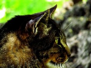 野生の凝視の写真素材 [FYI00198595]