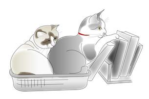 猫たちの写真素材 [FYI00198638]