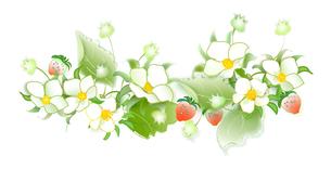 イチゴの花と果実の写真素材 [FYI00198648]