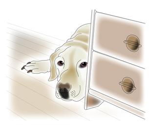 見つめる犬の写真素材 [FYI00198650]
