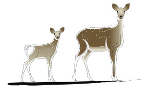 鹿の写真素材 [FYI00198651]