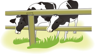 牧場の牛の写真素材 [FYI00198656]