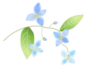 青い花の写真素材 [FYI00198658]