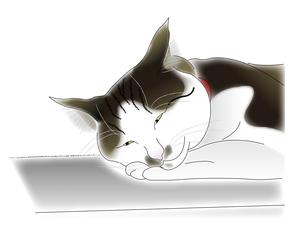 うたた寝する猫の写真素材 [FYI00198660]