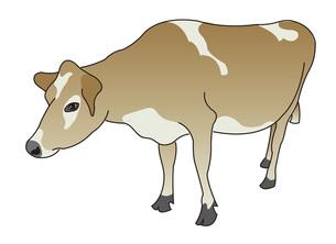 牛の写真素材 [FYI00198662]