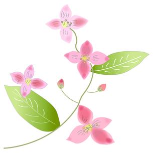 ピンクの花の写真素材 [FYI00198664]