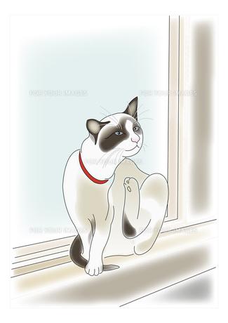 窓辺の猫の素材 [FYI00198671]
