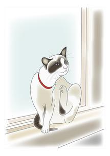 窓辺の猫の写真素材 [FYI00198671]