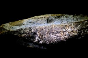 魚の化石の写真素材 [FYI00198842]
