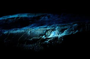 魚の化石の写真素材 [FYI00198851]