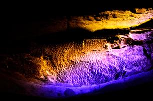 魚の化石の写真素材 [FYI00198862]
