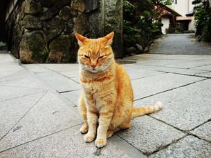 猫とにらめっこの写真素材 [FYI00198867]