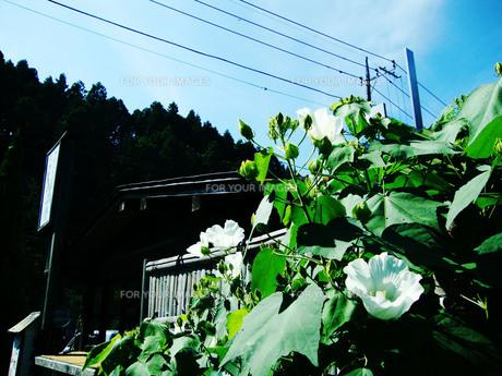 夏空と白い花の写真素材 [FYI00198880]