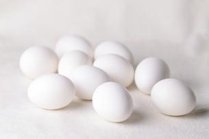 卵の写真素材 [FYI00198921]