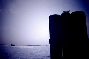 自由の女神とカモメの写真素材 [FYI00199764]