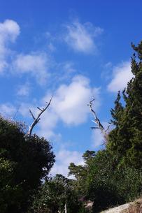青空に伸びる白木の素材 [FYI00199843]