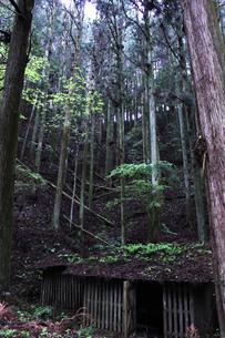 樹海の小屋の写真素材 [FYI00199862]