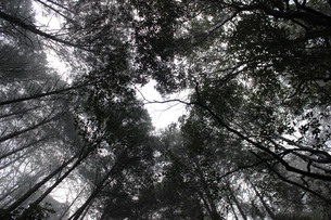 樹海の写真素材 [FYI00199876]