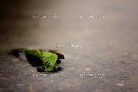 水たまりの落ち葉の写真素材 [FYI00199895]