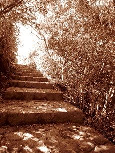 石の階段と樹木 セピアの素材 [FYI00199927]