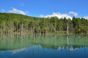 青い池の写真素材 [FYI00200267]