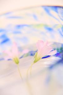 野花の夏の写真素材 [FYI00200293]