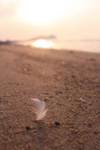 天使の羽根 舞い降りるの写真素材 [FYI00200303]