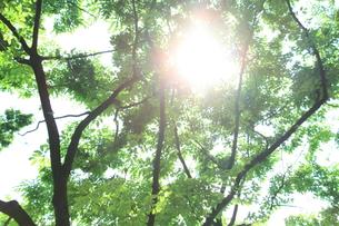 天神中央公園の初夏の写真素材 [FYI00200310]