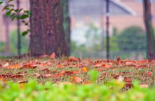芽吹く季節の写真素材 [FYI00200325]