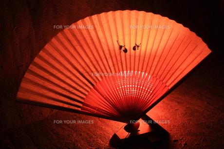 夏の風物詩 扇子の写真素材 [FYI00200329]