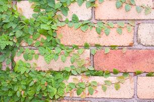 赤レンガに延びる緑の写真素材 [FYI00200348]