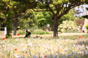 海の中道海浜公園の花々の写真素材 [FYI00200350]