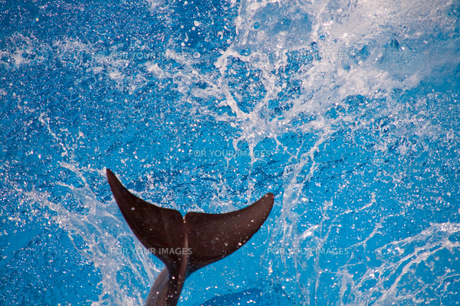 dolphin tailの写真素材 [FYI00200360]