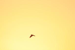 飛翔の写真素材 [FYI00200361]
