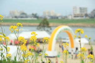 川辺の菜の花畑の写真素材 [FYI00200371]