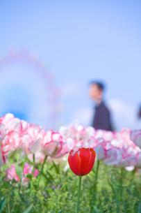 あなたに花束をの写真素材 [FYI00200394]