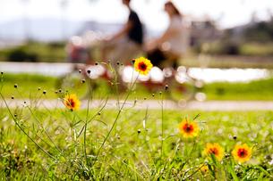 花開くの写真素材 [FYI00200445]