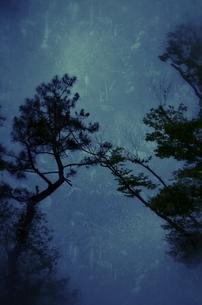 初夏の夜の写真素材 [FYI00200462]