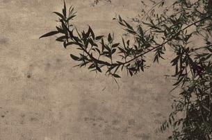 Oriental Breezeの写真素材 [FYI00200472]