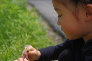 たんぽぽの綿毛と少女の写真素材 [FYI00200481]
