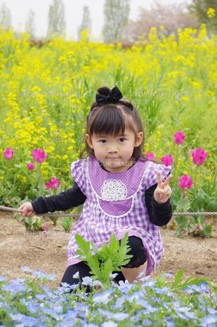お花畑の少女の写真素材 [FYI00200488]