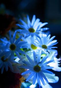 flowerの写真素材 [FYI00200499]