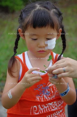 クローバーと女の子の写真素材 [FYI00200507]
