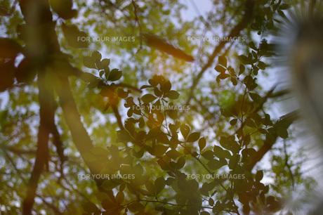 水面にうつる緑たちの写真素材 [FYI00200621]