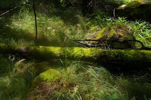 静かな倒木の写真素材 [FYI00200626]