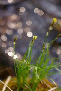 風にそよぐ草たちの写真素材 [FYI00200633]